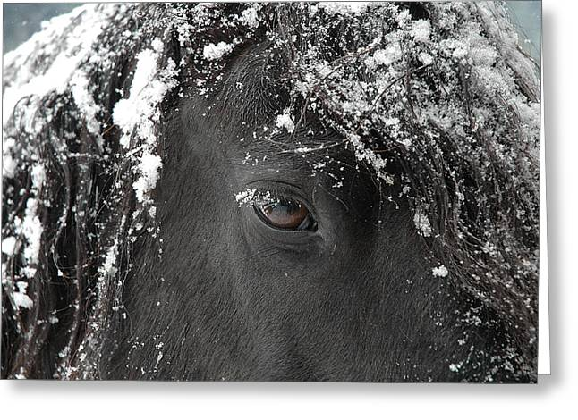 Horse Prints Greeting Cards - A few of my favorite things Greeting Card by Fran J Scott