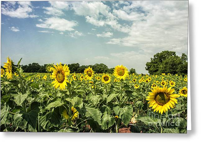 Valuable Greeting Cards - A Field of Glory Greeting Card by Terry Rowe