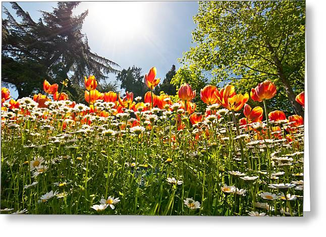 Vibrant Green Greeting Cards - A Field Of Tulips In A Garden Greeting Card by Leyla Ismet