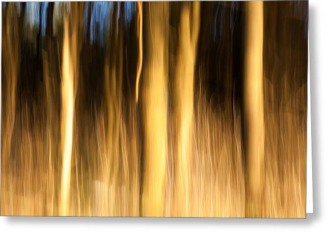 Warm Landscape Greeting Cards - A fiery forest Greeting Card by Davorin Mance