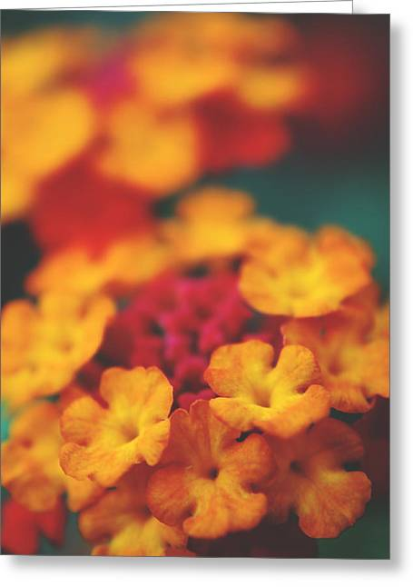 Flower Closeups Greeting Cards - A Fiery Love Greeting Card by Laurie Search