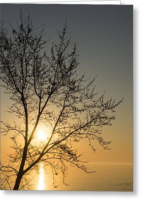 A Filigree Of Branches Framing The Sunrise Greeting Card by Georgia Mizuleva