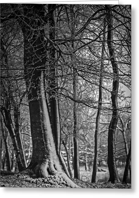 Snow-coated Greeting Cards - A Fine Winter Coat Greeting Card by Odd Jeppesen