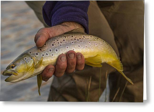 Brown Trout Photographs Greeting Cards - A Fish in Hand Greeting Card by Jean Noren