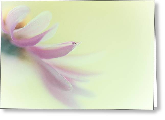 Harding Greeting Cards - A fleeting kiss Greeting Card by Constance Fein Harding