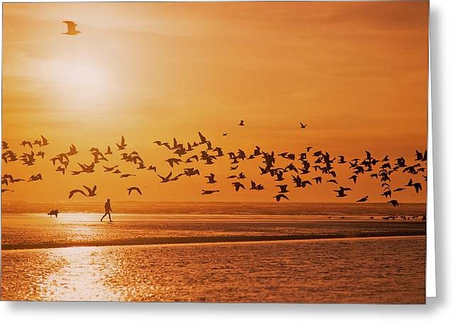 A Flock Of Birds Fly Over The Beach Greeting Card by Robert L. Potts