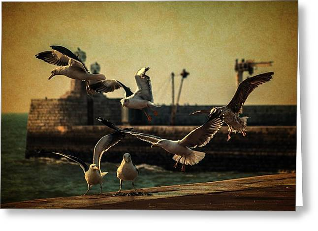 Beach Scenery Greeting Cards - A Flock of Seagulls Greeting Card by Marco Oliveira