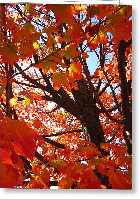 Guy Ricketts Photography Greeting Cards - A Flurry of Crimson and Scarlet Greeting Card by Guy Ricketts
