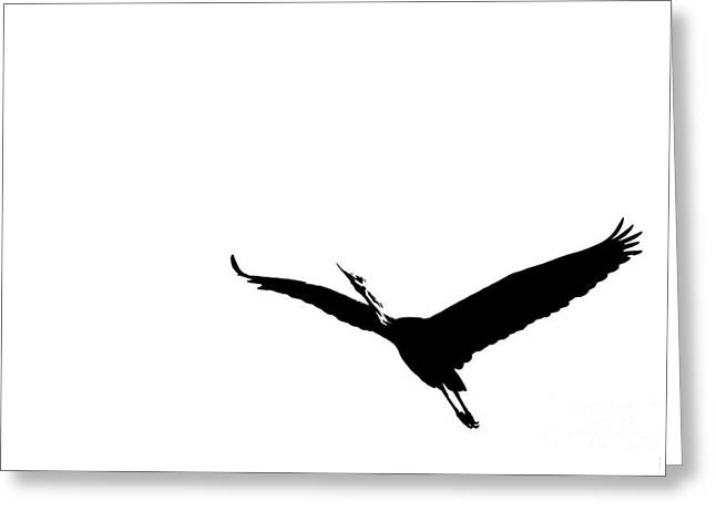 Strech Greeting Cards - A Flying Great Heron Greeting Card by Leyla Ismet
