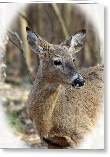 Most Viewed Digital Greeting Cards - A Forest Beauty  Greeting Card by Lorna Rogers Photography