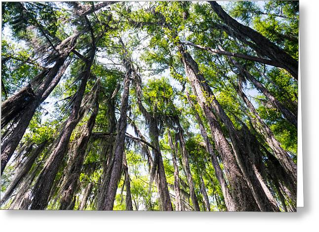 Wetland Greeting Cards - A forest of bald cypress trees in the Caddo Lake area Greeting Card by Ellie Teramoto