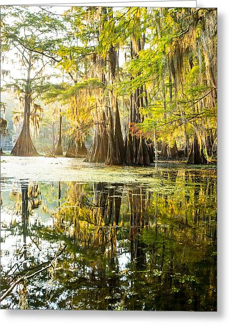 Spanish Moss Greeting Cards - A forest of bald cypress trees in the morning sun Greeting Card by Ellie Teramoto