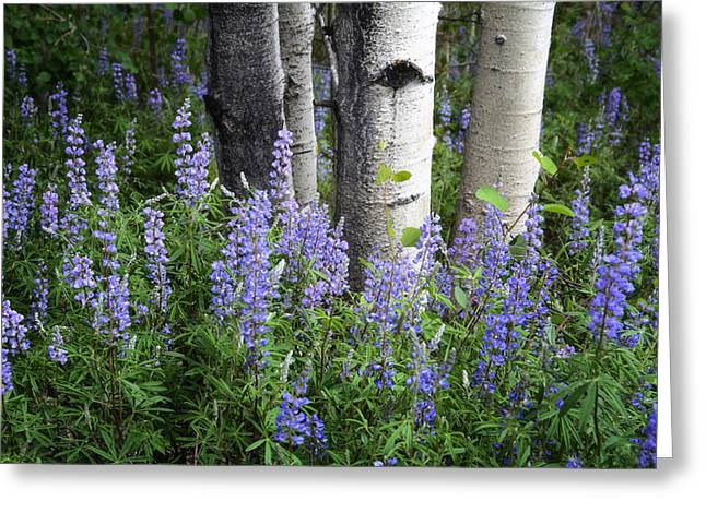 A Forest Of Blue Greeting Card by The Forests Edge Photography - Diane Sandoval
