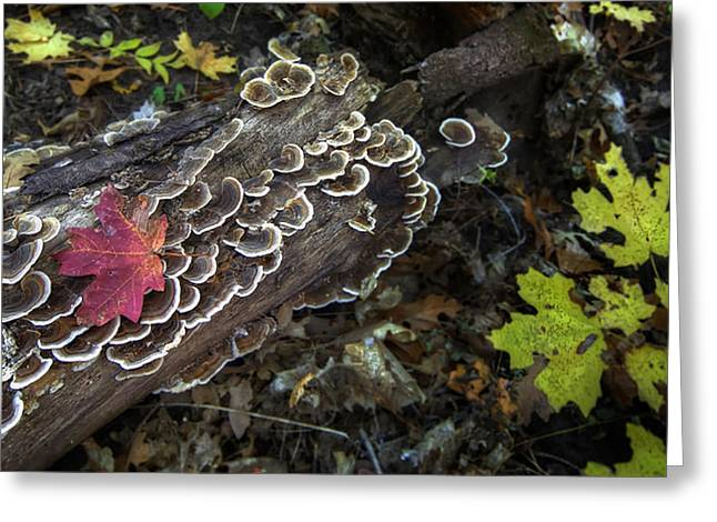 Burnt Umber Greeting Cards - A Forest Tide Pool Greeting Card by Sean Foster