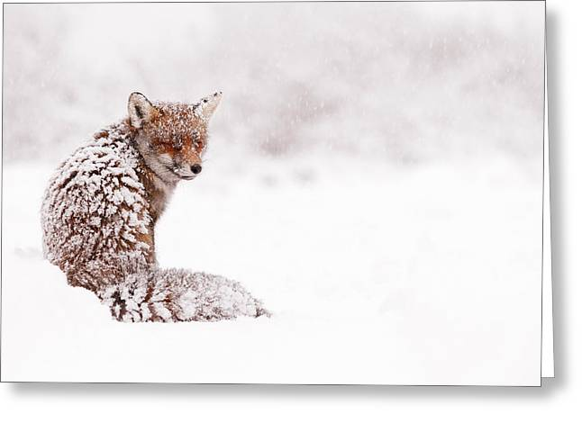 Winter Scene Photographs Greeting Cards - A Fox Fantasy Greeting Card by Roeselien Raimond
