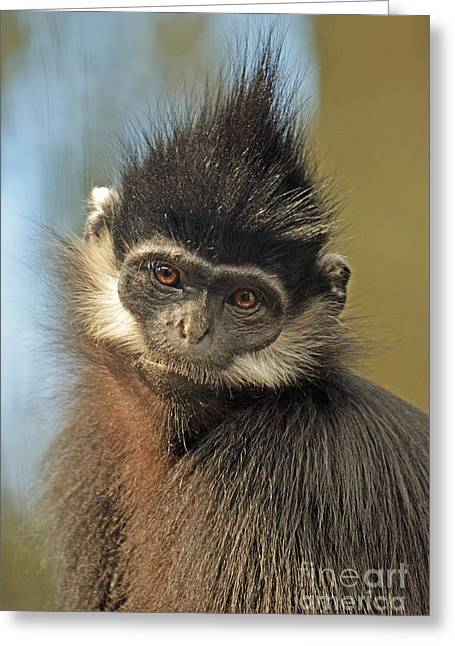 Francois Digital Greeting Cards - A Francois Langur Monkey or Marvin the Martians Cousin  Greeting Card by Jim Fitzpatrick
