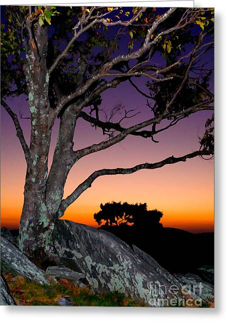 Paint Photograph Greeting Cards - A Fresh Chance at Life II Greeting Card by Dan Carmichael