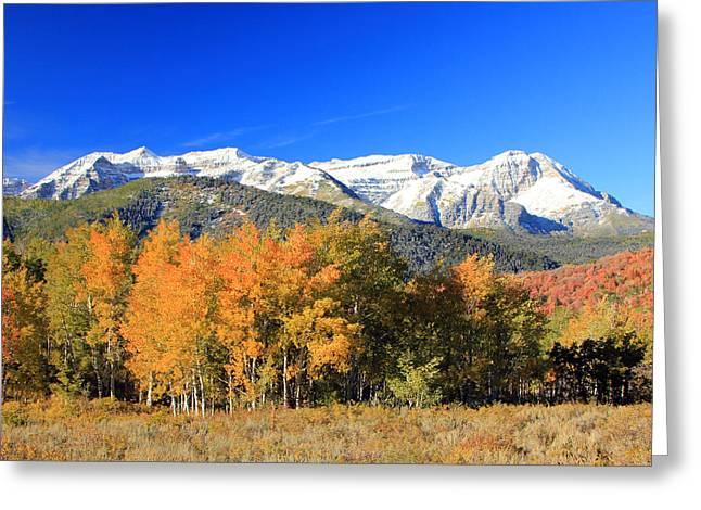 Fall Splendor Greeting Cards - A fresh coat of white. Greeting Card by Johnny Adolphson
