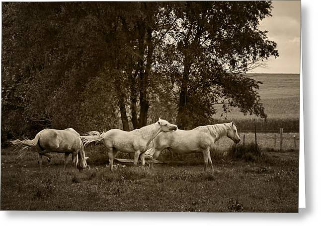 Brown Tones Greeting Cards - A Friend Indeed - Horses  Greeting Card by Nikolyn McDonald