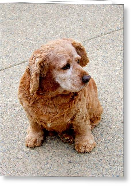 Kauai Dog Greeting Cards - A Friend Named Bud Greeting Card by Mary Deal