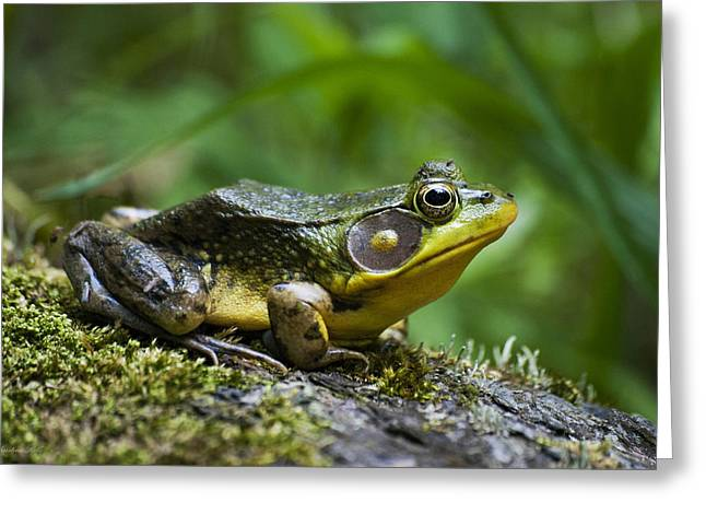 A Frog Is Forever Greeting Card by Christina Rollo
