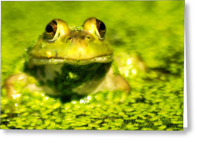A Frogs Day Greeting Card by Optical Playground By MP Ray