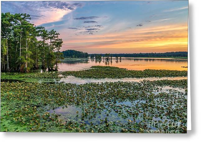 Lilly Pads Greeting Cards - A frogs paradise Greeting Card by Anthony Heflin