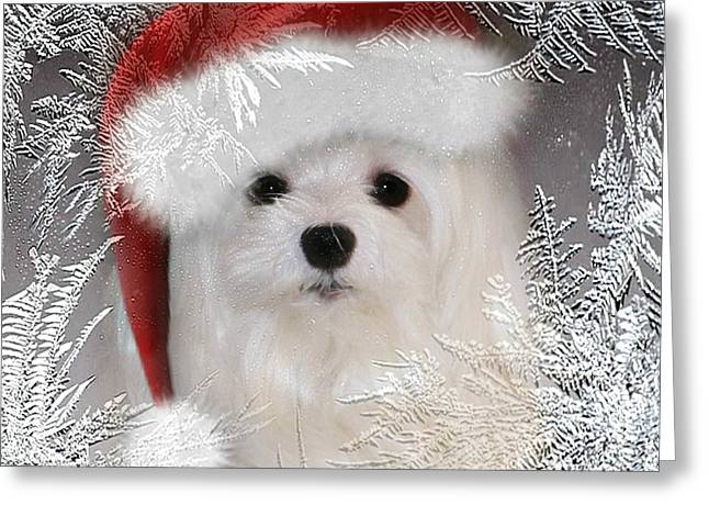 Maltese Greeting Cards - A Frosty Morning Greeting Card by Morag Bates