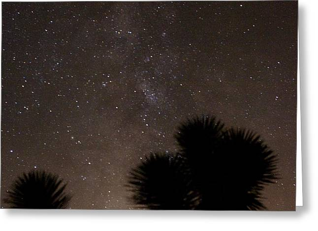 Opt Greeting Cards - A Galaxy and a Joshua Tree 1 Greeting Card by Carolina Liechtenstein