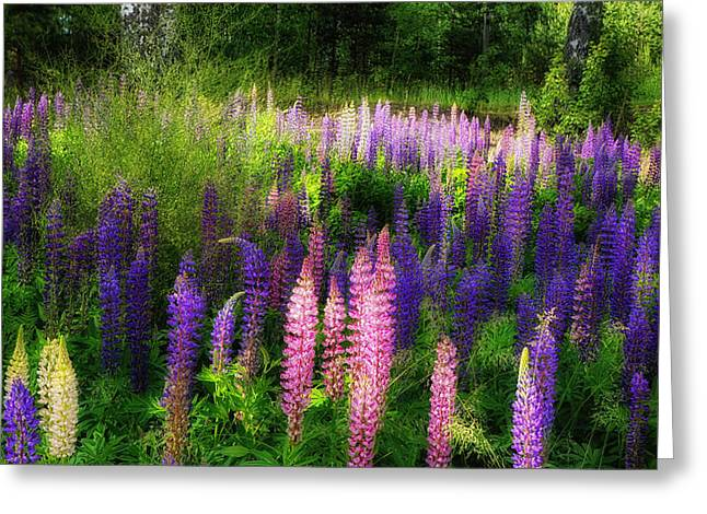 Herbage Greeting Cards - A Garden in Finland Greeting Card by Mountain Dreams