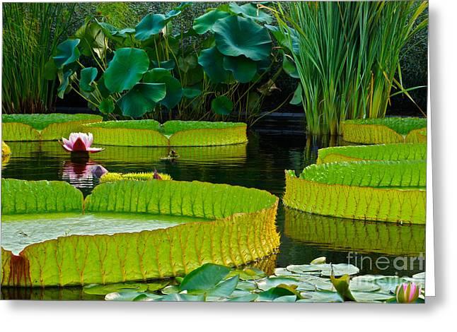 A Garden In Gentle Waters Greeting Card by Byron Varvarigos