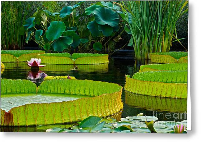 Victoria Cruziana Greeting Cards - A Garden In Gentle Waters Greeting Card by Byron Varvarigos