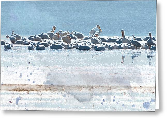 American White Pelican (pelecanus Erythrorhynchos) Greeting Cards - A Gathering of Pelicans Greeting Card by Betty LaRue