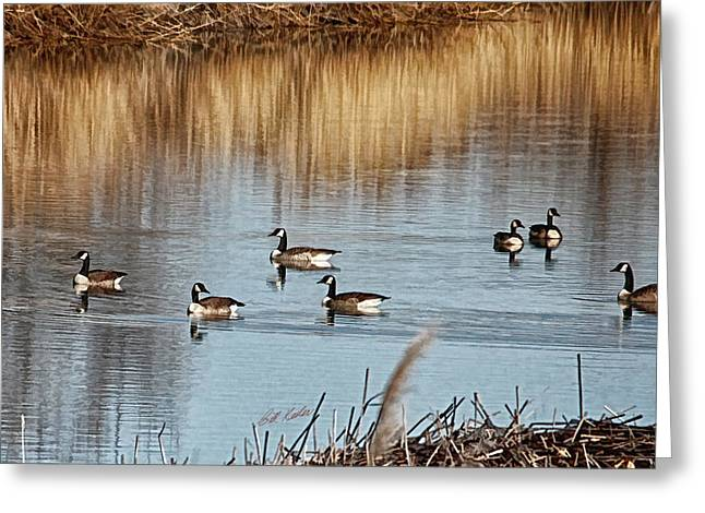 Bill Kesler Greeting Cards - A Geese Gathering Greeting Card by Bill Kesler