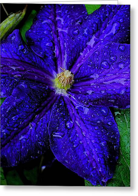 A Gentle Rain Greeting Card by Frozen in Time Fine Art Photography