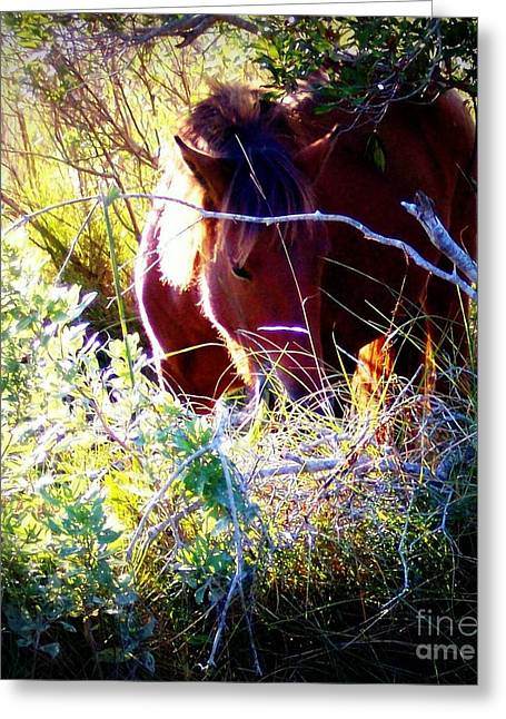 Wildlife Refuge. Greeting Cards - A Glimpse Of Graze Greeting Card by Janine Riley
