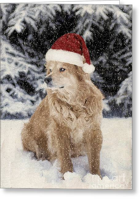 Furry Coat Greeting Cards - A Golden Christmas Greeting Card by Darren Fisher