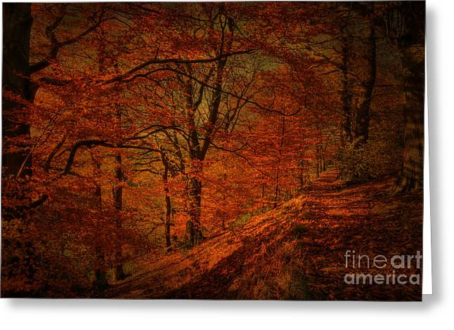 David Birchall Greeting Cards - A Golden day Greeting Card by David Birchall