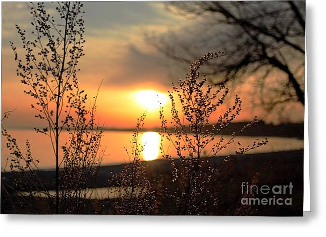 A Golden Moment In Time Greeting Card by Inspired Nature Photography Fine Art Photography