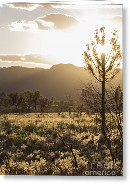 Morn Greeting Cards - A Golden Morning Greeting Card by Linda Lees