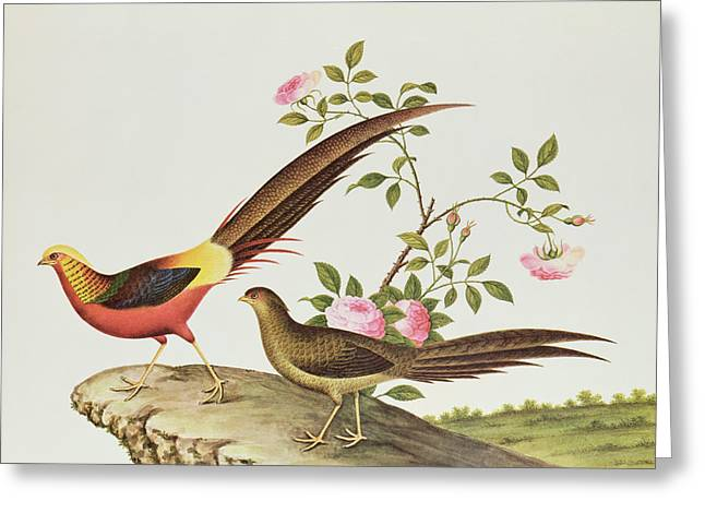 Dynasty Greeting Cards - A Golden Pheasant Greeting Card by Chinese School