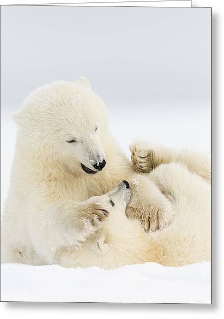 Polar Bear Standing Greeting Cards - A Good Clean Fight Greeting Card by Tim Grams