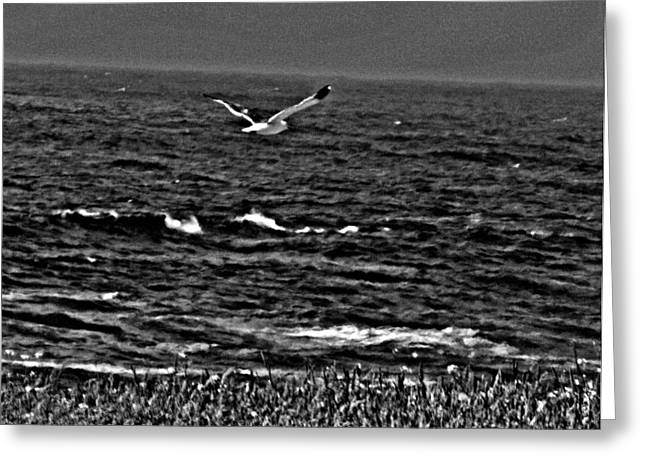 California Ocean Photography Greeting Cards - A gr8 day to Fly Greeting Card by Joseph Coulombe