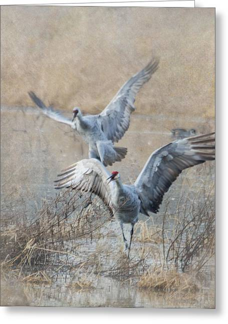 Sandhill Crane Greeting Cards - A Grand Entrance Greeting Card by Angie Vogel