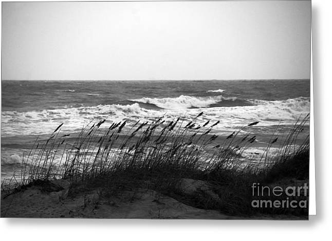 A Gray November Day at the Beach Greeting Card by Susanne Van Hulst