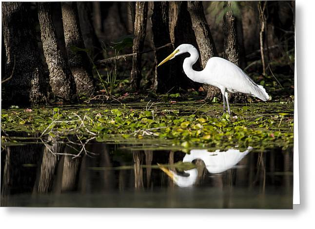 White Bird Greeting Cards - A Great Egret in Tranquility  Greeting Card by Ellie Teramoto