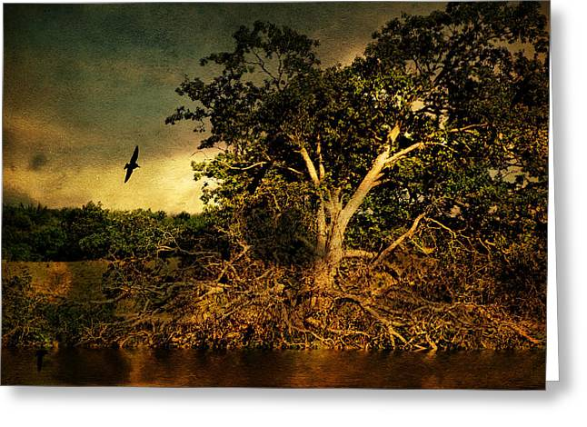 A Great Fallen Tree Greeting Card by Pamela Phelps