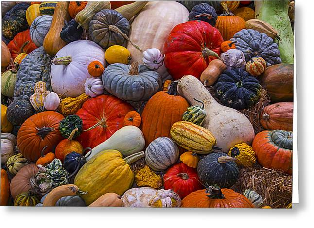 Gourd Greeting Cards - A Great Harvest Greeting Card by Garry Gay