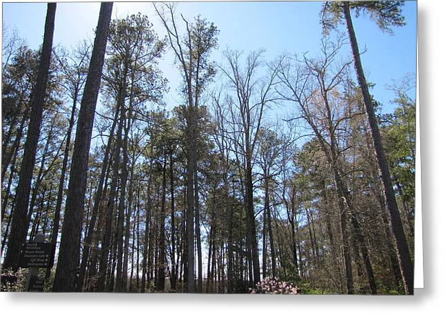 Many Pyrography Greeting Cards - A group of trees on and blue sky Greeting Card by A J