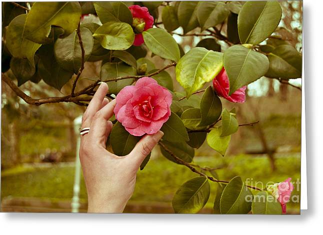 A hand and a Camellia Greeting Card by Dr Mador